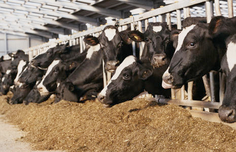 Grain fed cows use up more of the world's resources and account for much of the carbon emissions. They have less animal welfare and the meat can contain antibiotics and hormones.
