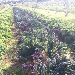 Carvelo farming.jpg
